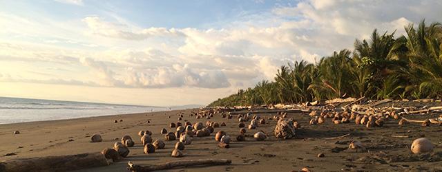 Playa Zancudo – Verstecktes Paradies am Golfo Dulce