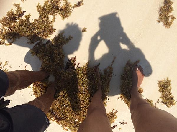 Seegras an der Küste von Cancún