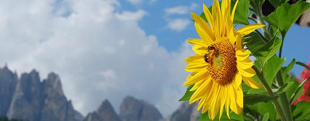 Südtirol - Natur, Geschichte und Sonnenschein
