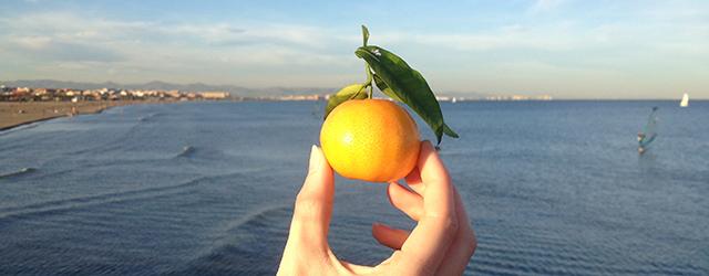 Valencia - bekannt für seine vielen  Mandarinenbäume