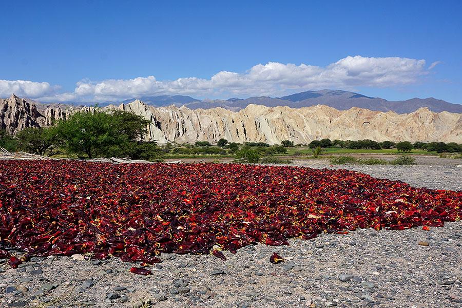 Chili-Schote beim Trocknen in der Quebrada de las Flechas in den Valles Calchaquíes im Norden von Argentinien